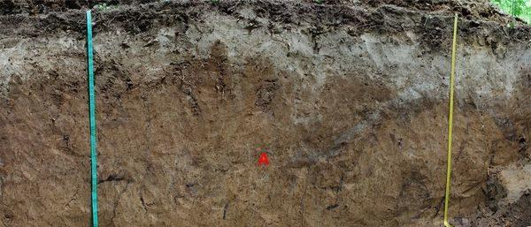 Подзолистая почва