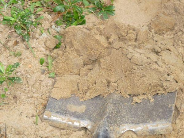 Пример песчаной почвы