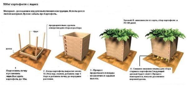 Проращивание картошки в ящике