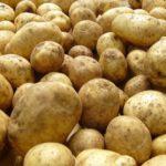 Сортовая картошка