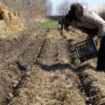 Средняя глубина посадки картофеля
