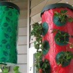 Выращивание клубники в мешках вертикально