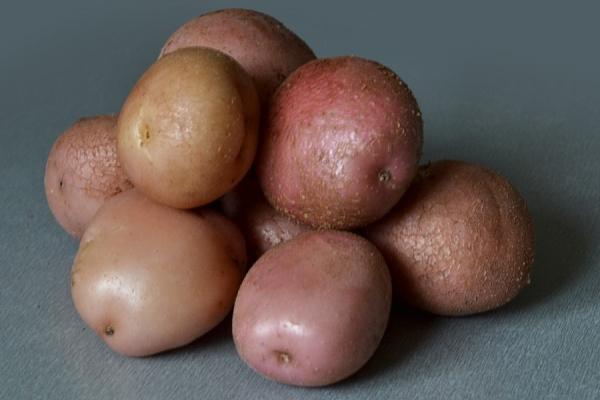 Картофель сорта Романо: описание и характеристики, отзывы, посадка и уход, хранение