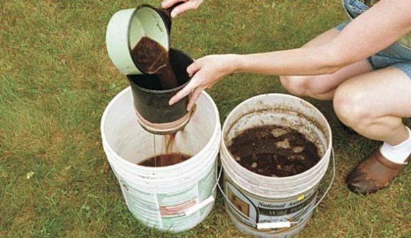 Компенсировать нехватку азота в почве, на которой растет лук, можно поливом мочевиной или раствором из навозной жижи