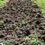 Для добавления рыхлости землю перекапывают несколько раз