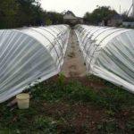 Выращивание в пленочных туннелях
