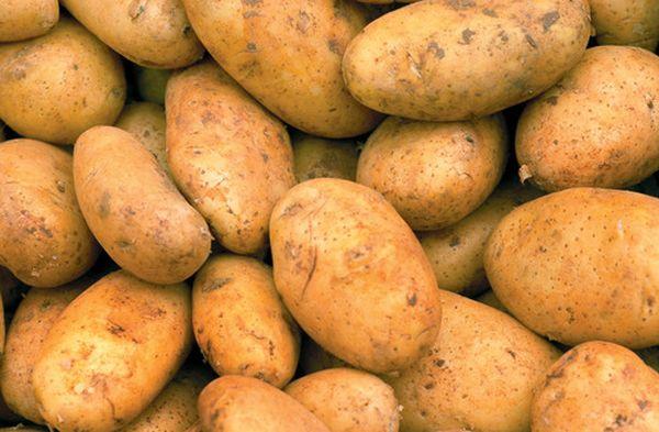 Картофель сорта Бриз