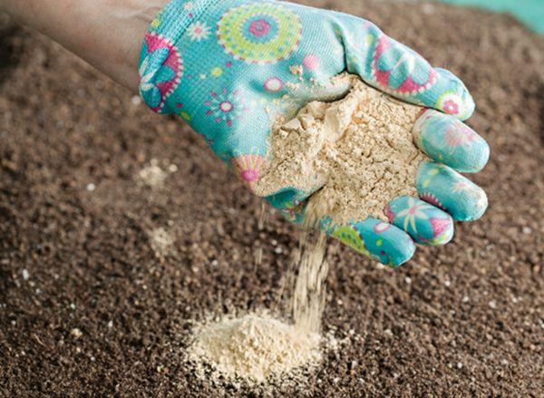 Успех выращивания зависит от качества саженцев