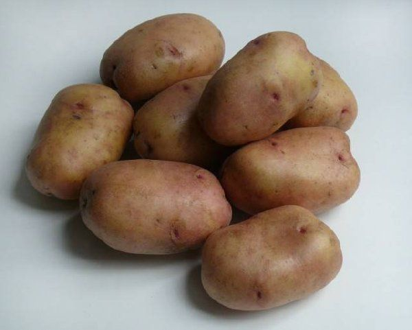 Раннеспелые сорта картошки не предназначены для длительного хранения