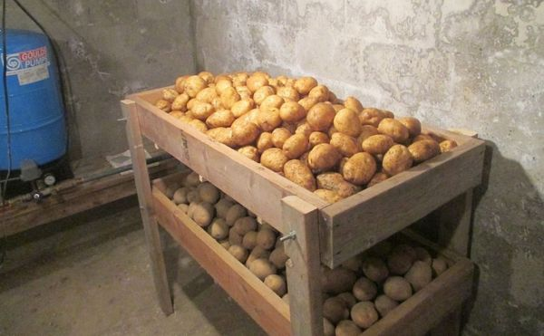 Лучше всего хранить картофель в погребе с температурой +4+6 градусов