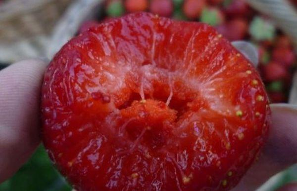 С одной сотки можно получить примерно 200 кг ягоды