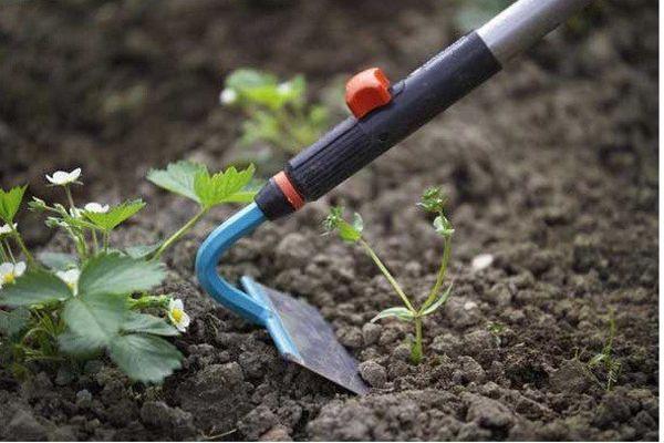 Механическое удаление сорняков не всегда может помочь