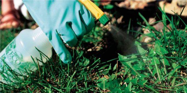 Гербициды сплошного действия удаляют всю растительность