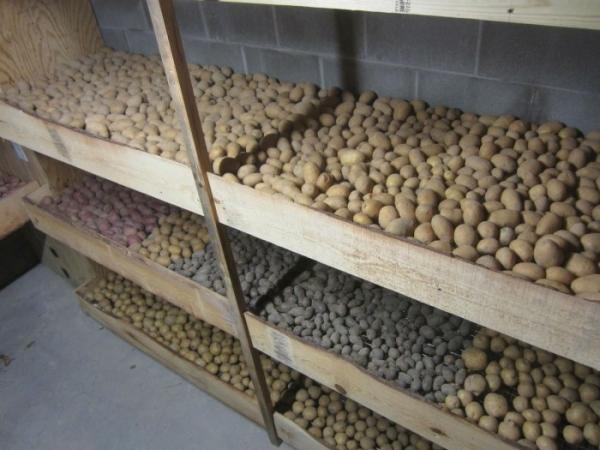 Лучшее место для картошки - погреб с вентиляцией