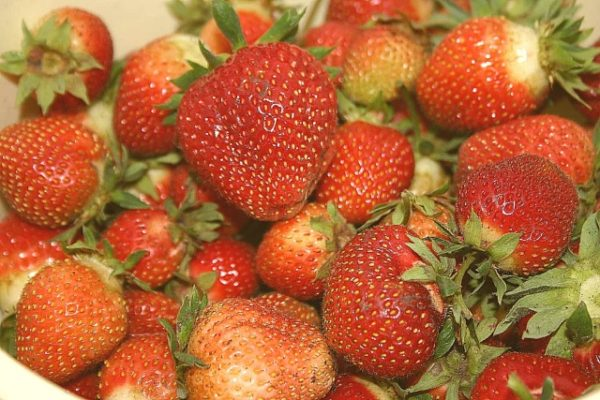 Вкусная ягода клубники первоклассница