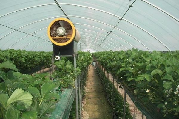 С помощью вентилятора можно опылять клубнику в закрытом помещении