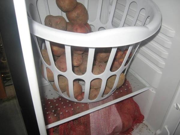 Хранить картофель в холодильнике можно не более 10-14 дней, соблюдая t режим