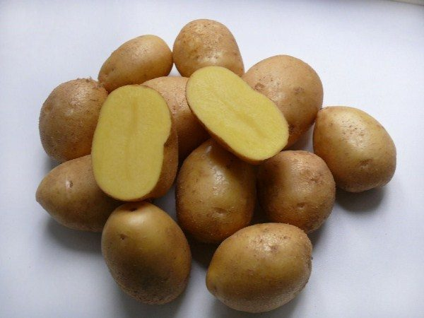 Клубень картофеля Коломбо в разрезе
