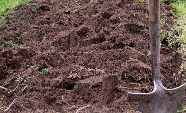 Для обогащения почвы кислородом производится рыхление