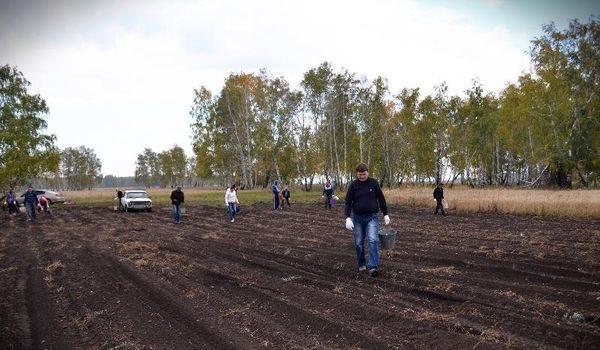 люди картошка поле