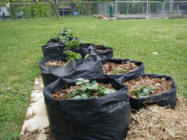 Картофель в мешках занимает мало места на участках