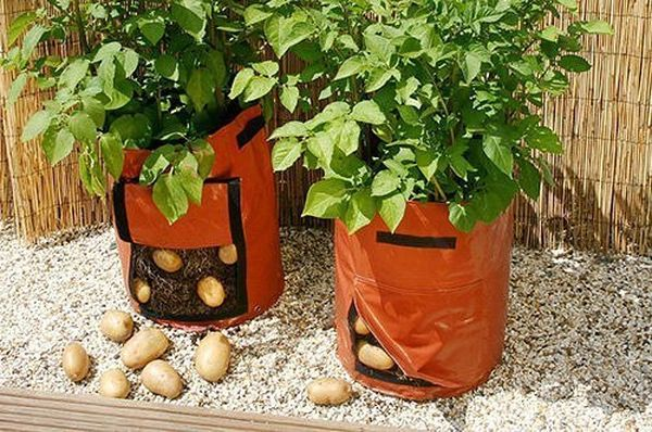 Созревший картофель удобно доставать через специальный клапан