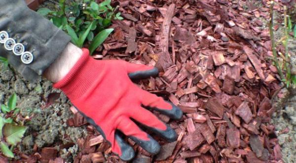 Мульчирование карой деревьев