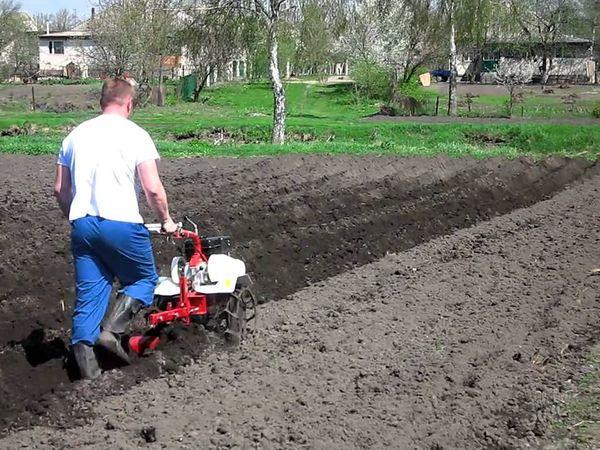 Весной необходимо вспахать землю перед посадкой
