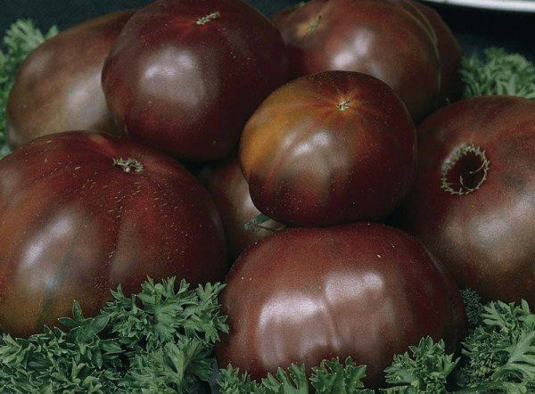 Отличается этот сорт необычной для помидоров окраской: темно-красной, почти бордовой