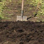 Первоначально участок перекапывают и вносят удобрения