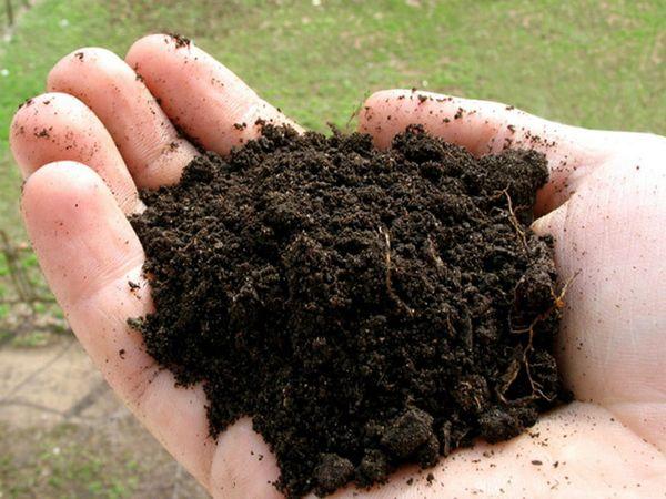 Настойка из торфа и соломы является органической и безопасной
