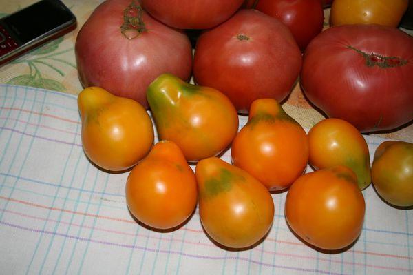 Мелкие томаты хорошо подходят для консервирования, крупные - для салатов