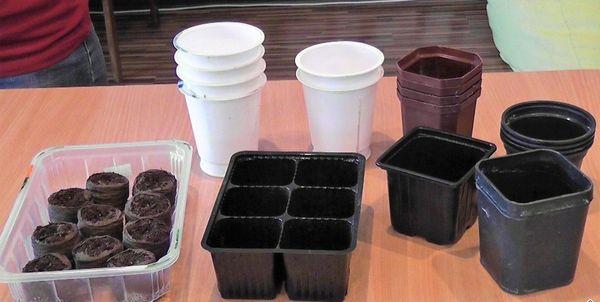 Для посадки рассады нужны емкости высотой около 12см, после пикирования подойдут стаканчики