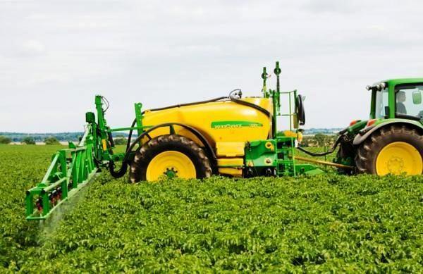 Применение гербицидов способно полностью исключить перенос вирусов, который провоцируется повреждением кустов