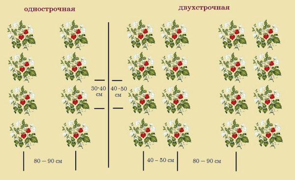 Схема посадки клубники Джоли