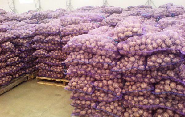 склад картофеля