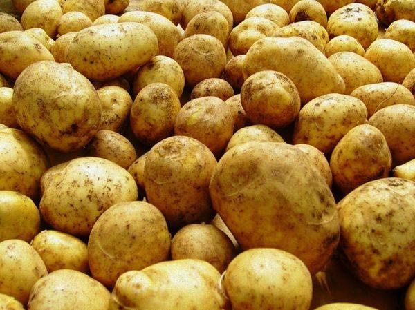 картофель солнце