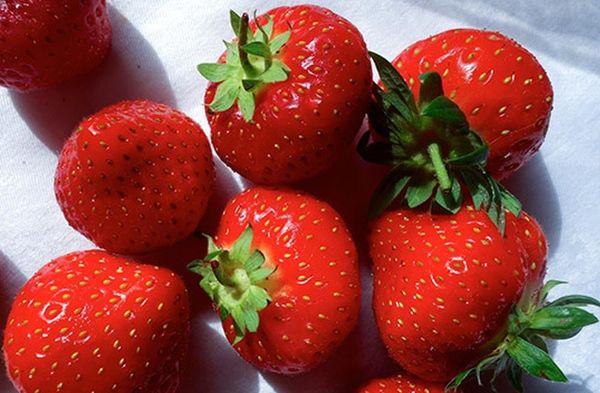 Правильный уход за клубникой Соната поможет получить богатый урожай