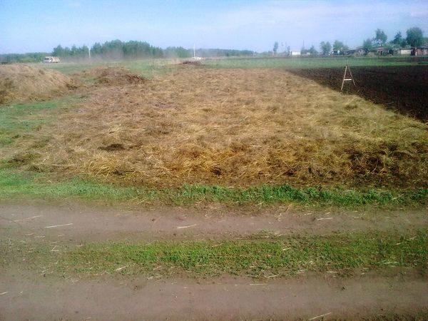 сухое поле