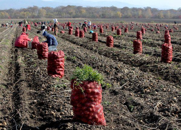Выращивание урожая
