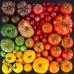 Разнообразие цветов плодов