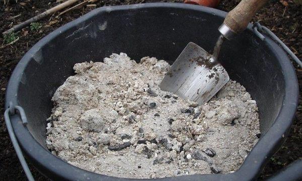 В почву для посадки нужно добавлять компост, золу и яичную скорлупу