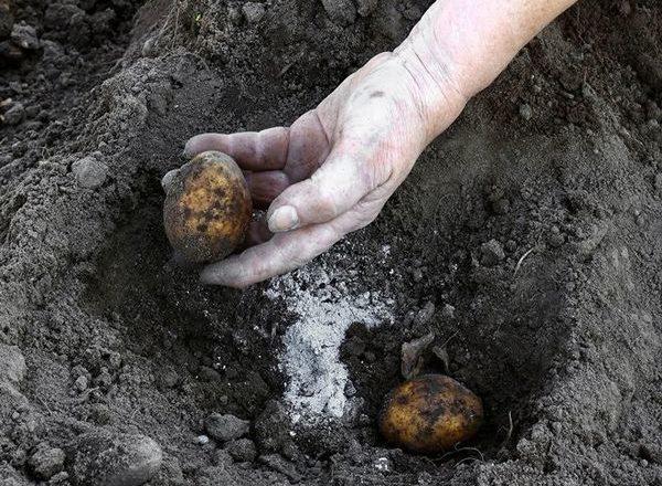 удобрения для картошки