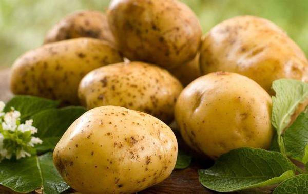 Картофель сорта Зекура