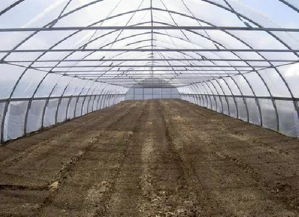 Выращивание клубники в теплицах зимой можно провести, используя дерновую землю