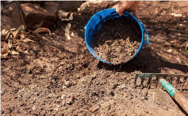 При подготовке грядок для посадки перца в землю добавляют навоз, перекапывают