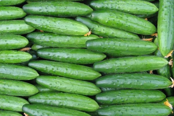 Огурец - это ягода, фрукт или овощ? Польза и вред, применение