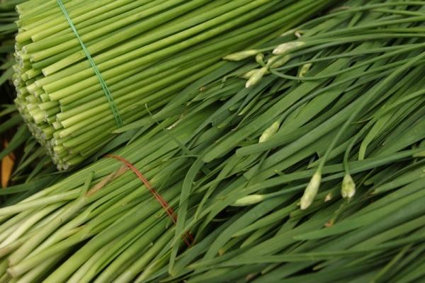 Китайский чеснок: описание и сорта, посадка и уход