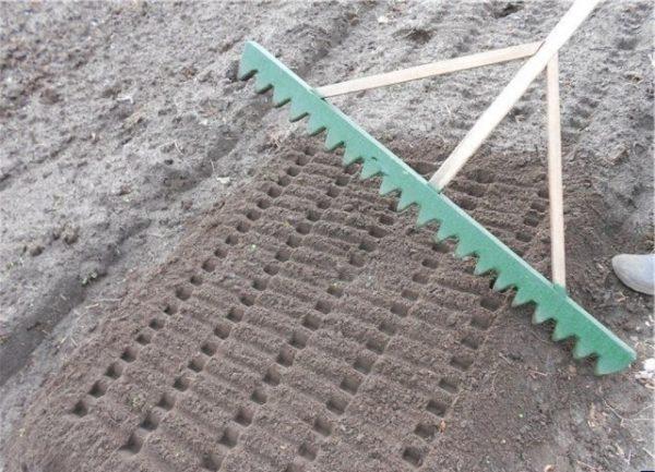 Самодельные грабли для посадки семян моркови