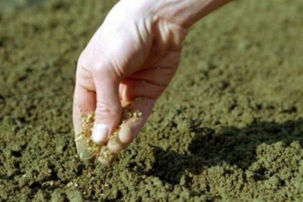 Посадка семян моркови просыпанные песком